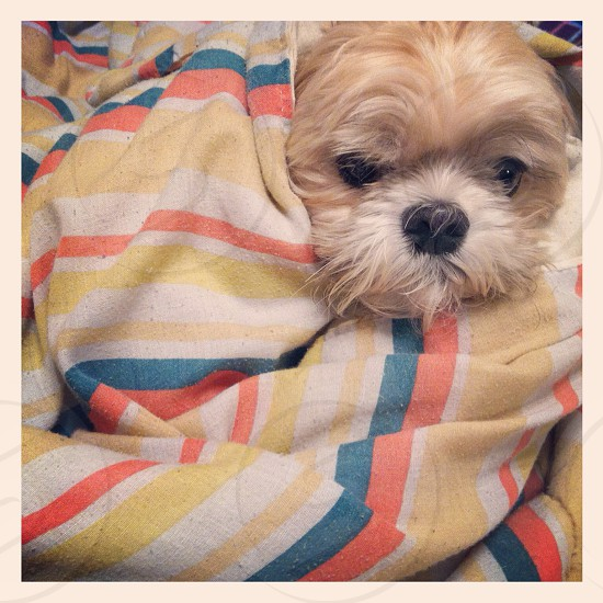My handsome & photogenic pup.  photo