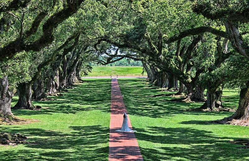 Bride walks down a path lined with live oak trees  Vacherie LA photo