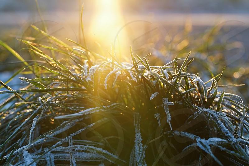 Frozen Grass with first sunlight photo