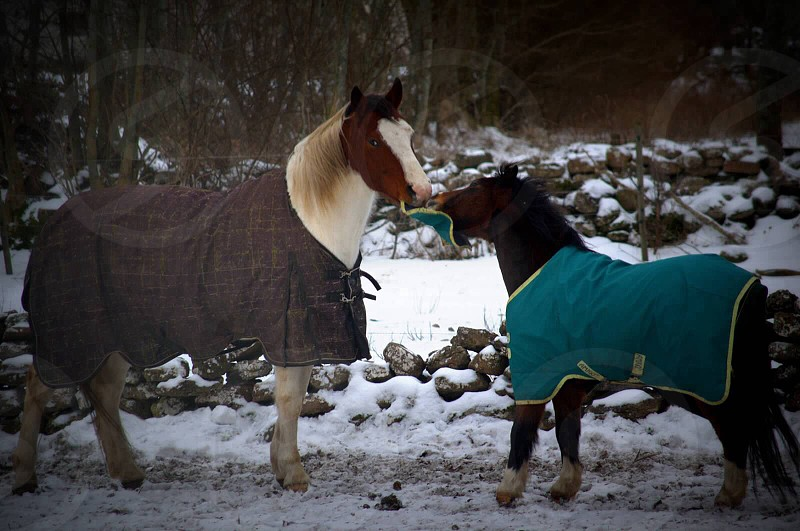 brown and white horse near small horse photo