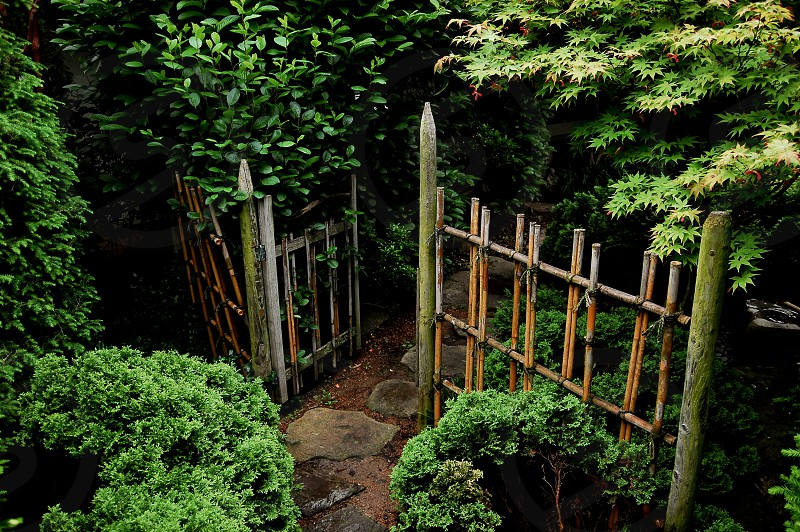A worn gate opens to a dark garden. photo