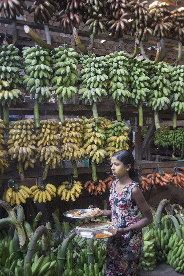a big Banana Shop in a Market near the City of Yangon in Myanmar in Southeastasia. photo