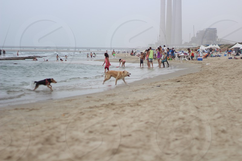brown haired dog near seashore photo