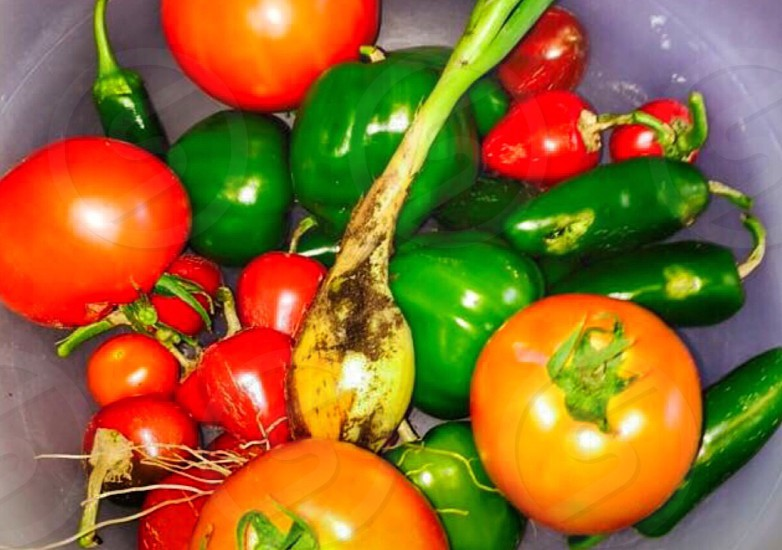 tomato and bell pepper in pastic container photo