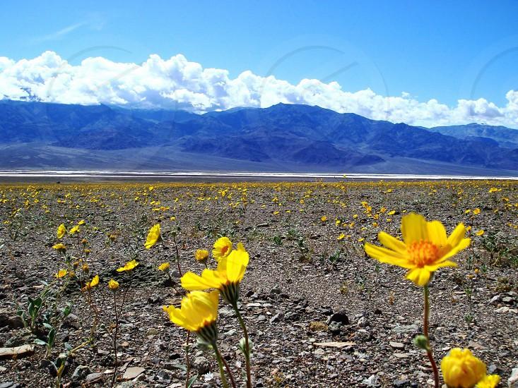 Spring in Death Valley photo