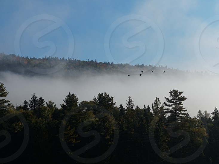 Morning fog in forest with birds in Mont-Tremblant National Park Quebec photo