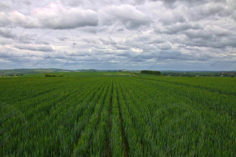 Wheat field at South Stoke Oxfordshire UK photo