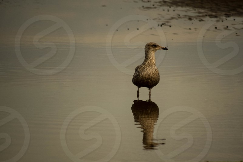 bird water reflection photo