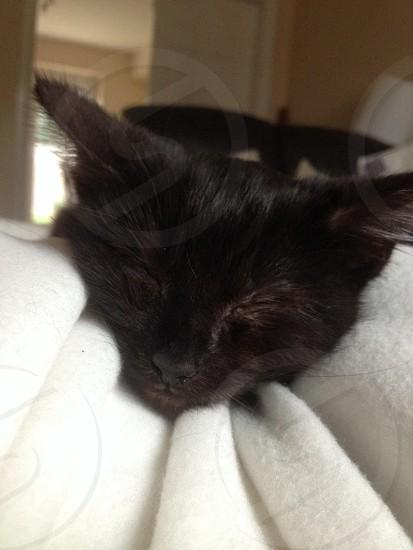 Our kitten photo
