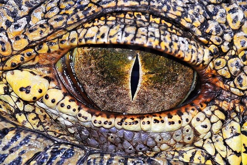 brown and beige animal eye in macro photography photo