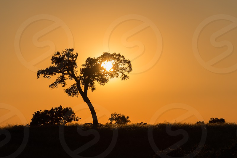 landscape sunset portugal sun tree sky photo