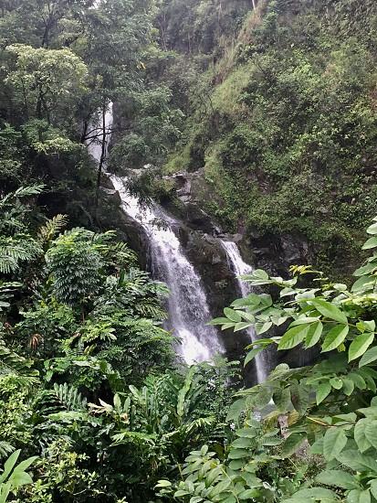Twin Sisters road to Hana Maui photo