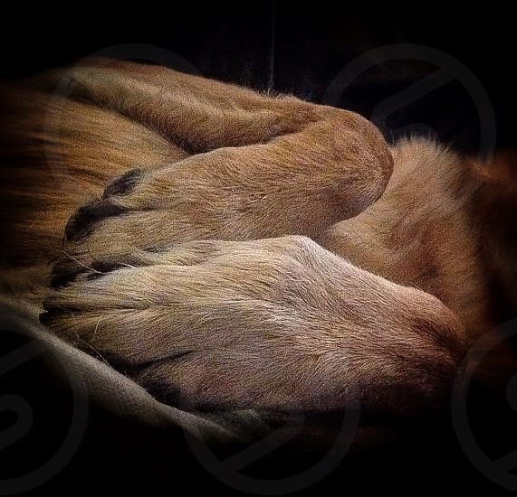 Paws for thought photo