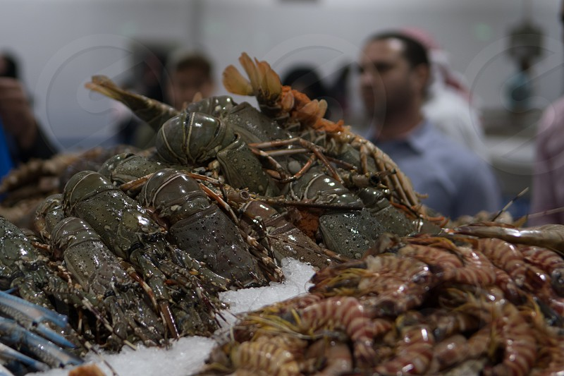 Fresh lobster and tiger prawns for sale at the modern fish market located in Dubai photo