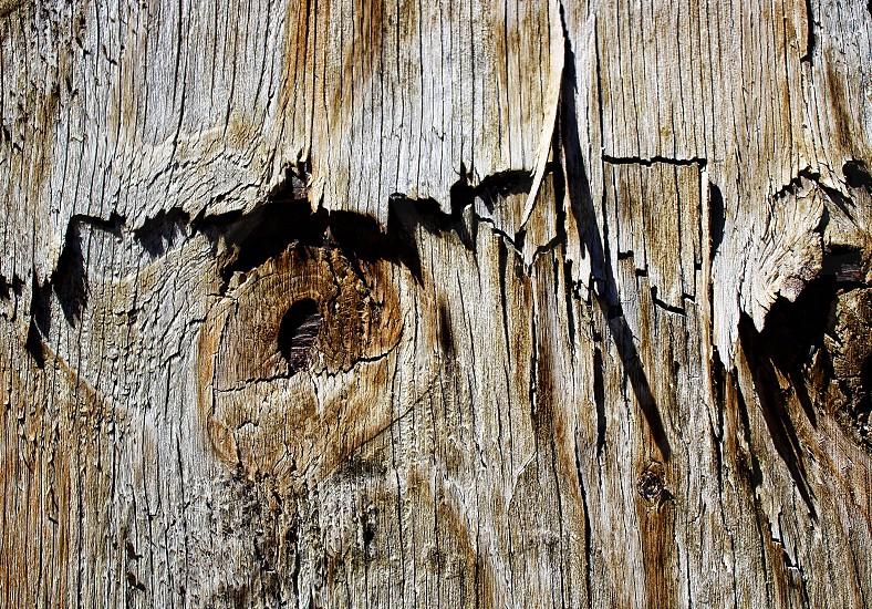 Section of peeling weathered wood. photo