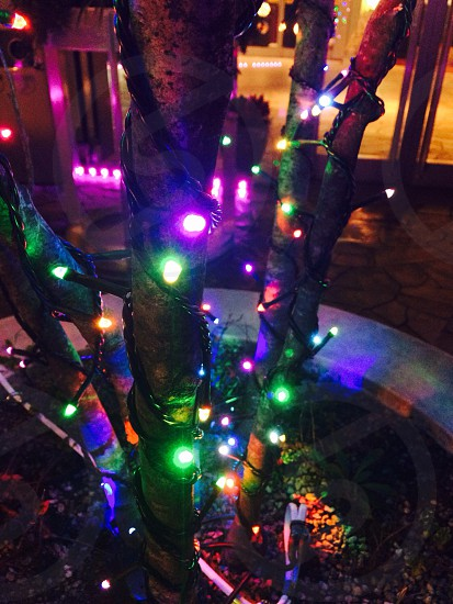 multicolored Christmas light on a tree photo