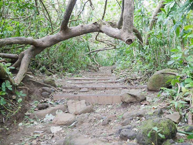 Manoa falls trail hike photo
