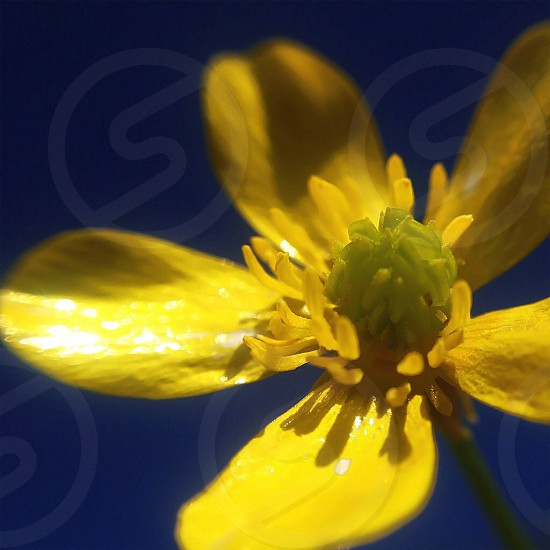 small yellow flower photo