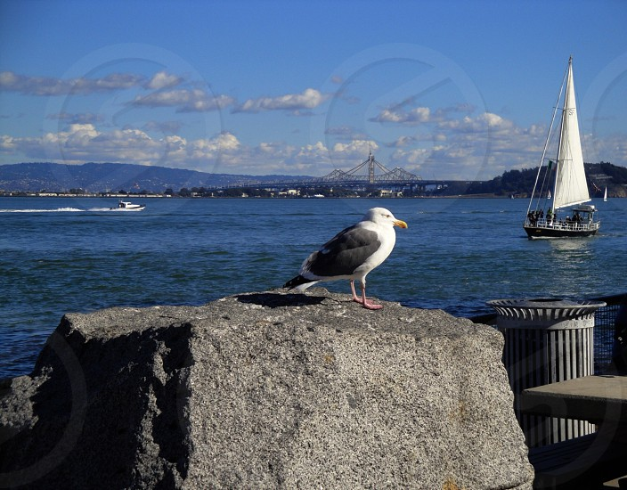gray and white seabird perched on a ston photo