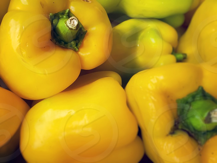 a group of yellow bell peppers. Healthy food an agriculture photo