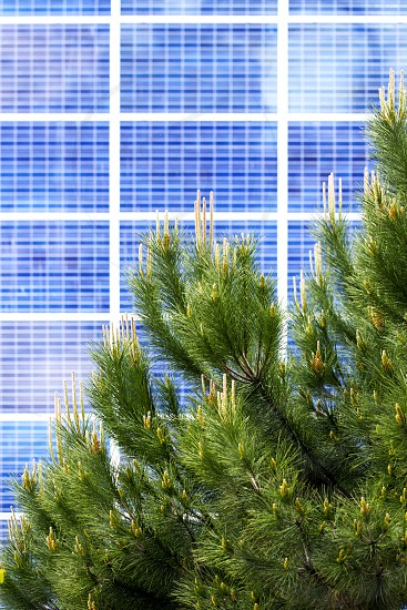 Renewable alternative solar energy photocell - solar panels on the wall of the building. In front of it are fluffy branches of green pine as a symbol of environmental friendliness. photo