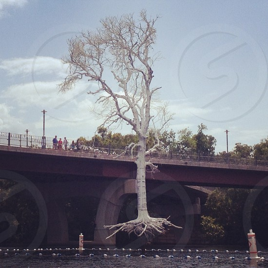 people standing on top of bridge near tree photo