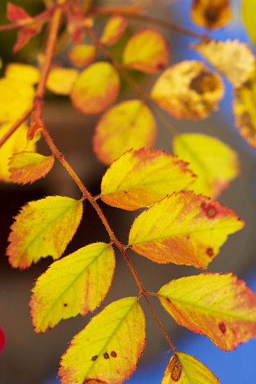 Autumn yellow leaf background photo