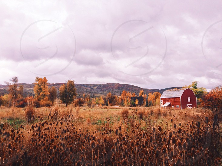 red wooden barn in the middle of the field photo