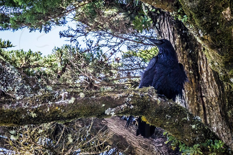 Black bird The Beatles.  photo