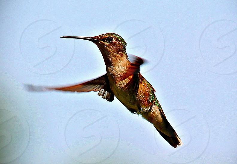#bird #Hummingbird #birds #fast photo