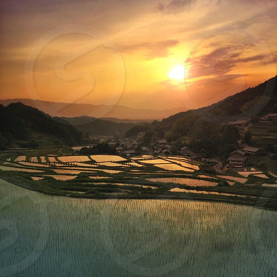 view of sunset and rice farm photo