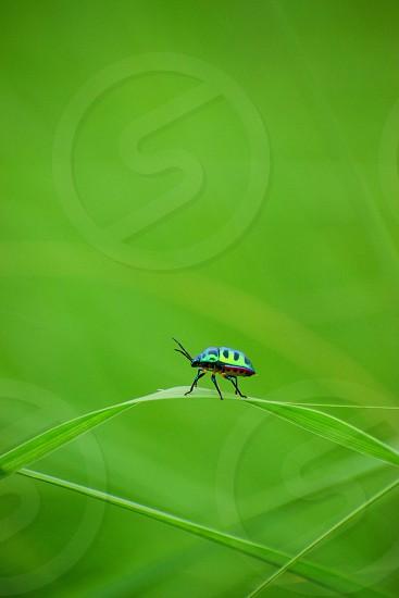a beautiful bug sitting on a grass leaf photo