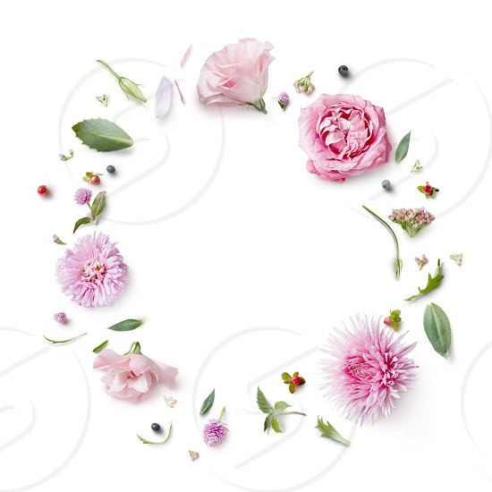 greeting card with frame flowers isolated on white photo