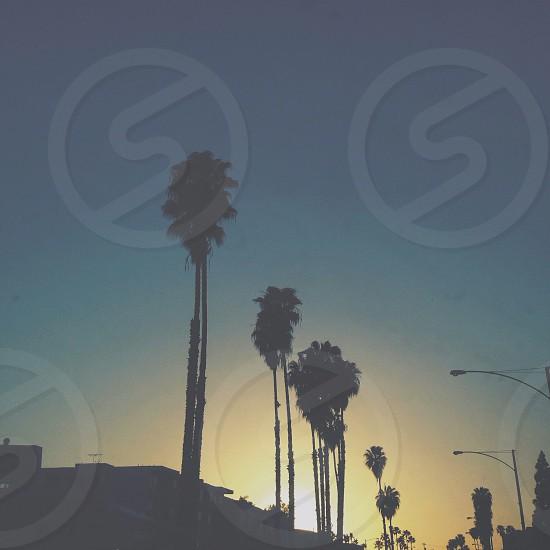 palm tree silhouette  photo