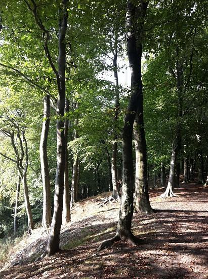 Woodland - Graves Park Sheffield photo