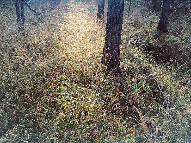 Sunlight in the woods over the high grass on the ground photo