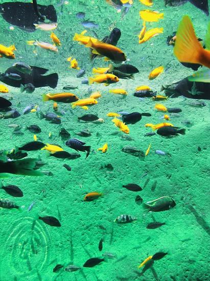 fish zoo. photo