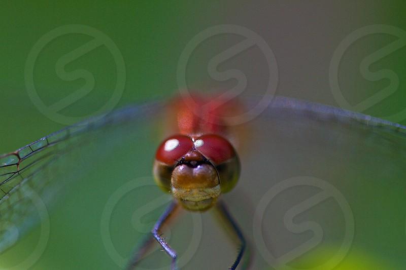 Dragonfly eyes photo