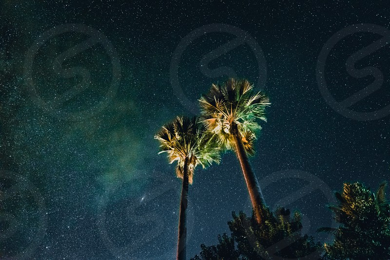 Halo ibid at night.  photo