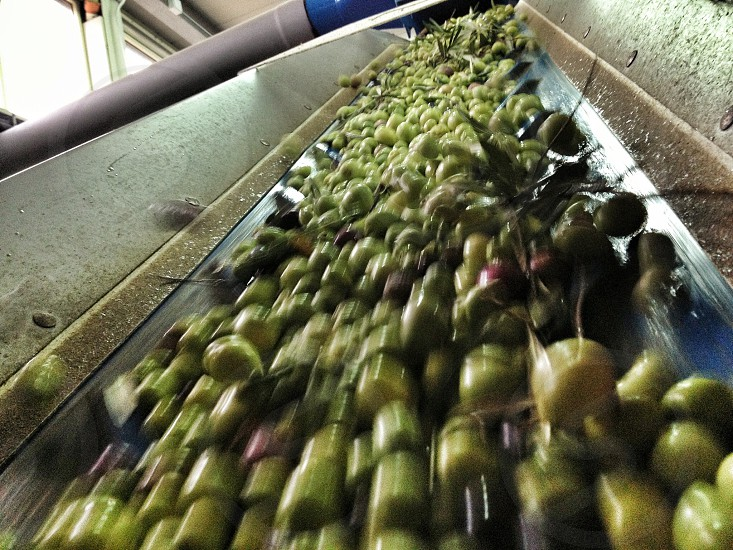 green fruit  photo