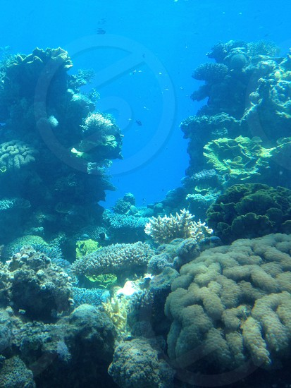 photo of fish and corals photo