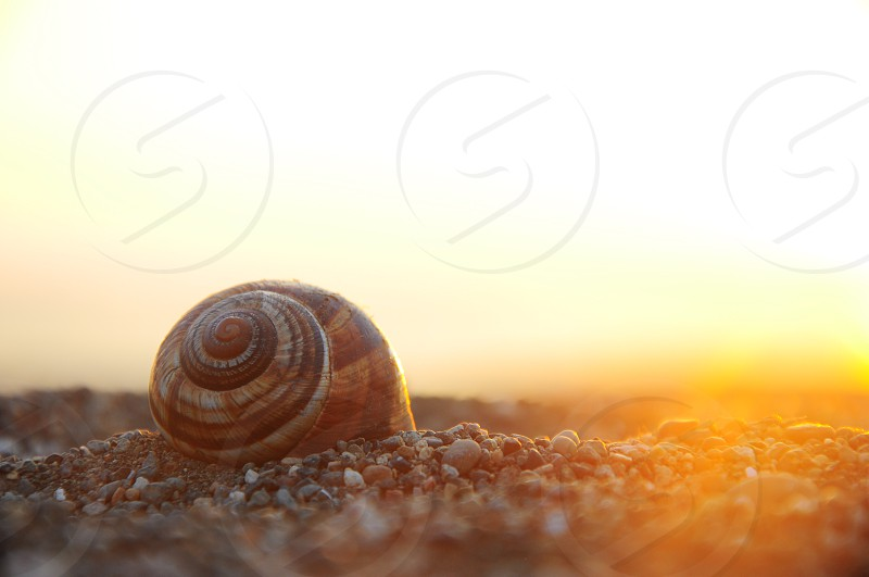 brown snail on ground during daytime photo