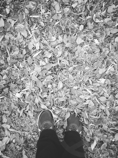 I give thanks to leaves!! photo