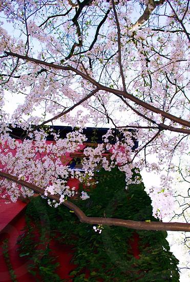 Spring Flowers City photo