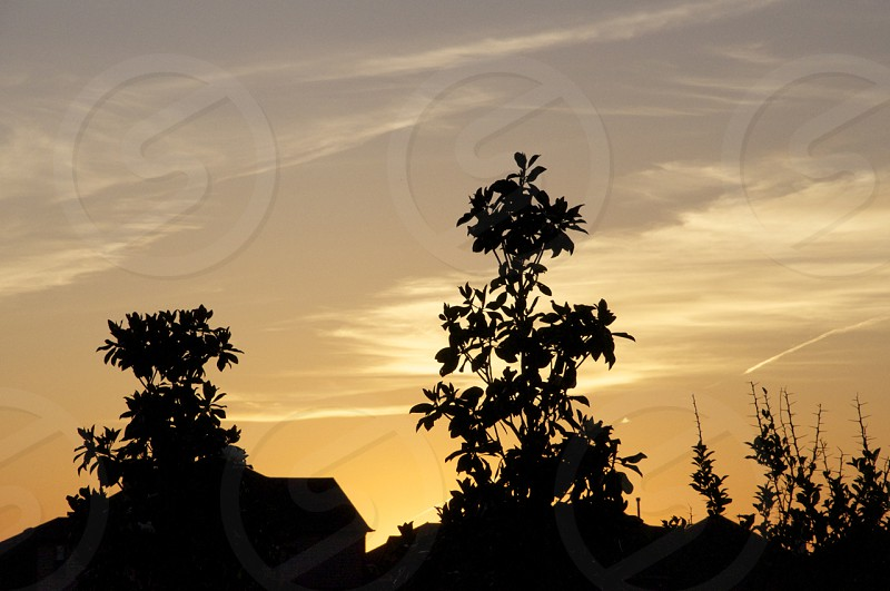 tree and house silhouette  photo