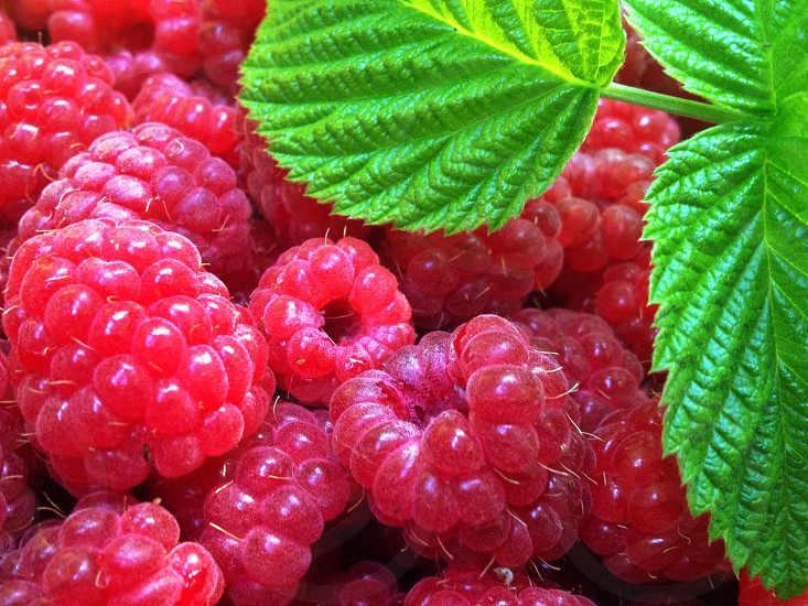 Raspberry and green leafs photo