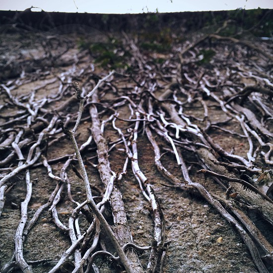 dry tree branches photo