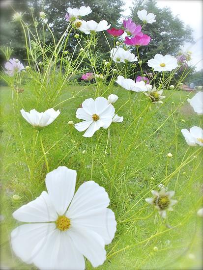 Wildflowers in spring photo