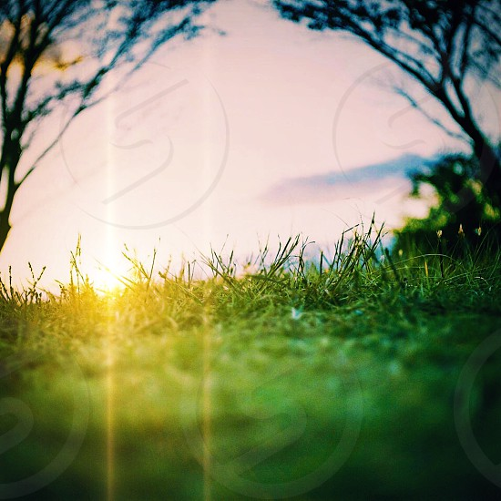 selective photography of green grass at sunrise photo