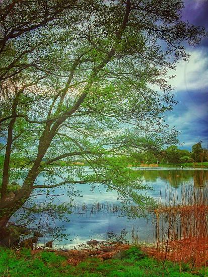 Dreamlike tree by the lakeside photo